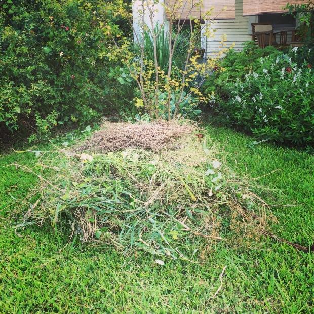 garden_weeds